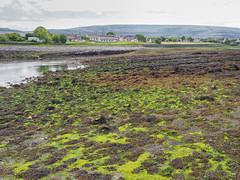 Low tide (Astaken) Tags: olympus omd em5 43 lens zuiko digital zd ed swd 1260mm