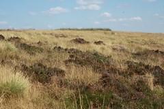 Grass (My photos live here) Tags: hathersage moor derbyshire england canon eos 1000dcountryside grass grassland high peak
