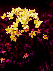 From Buds to Bloomers (Steve Taylor (Photography)) Tags: digitalart contrast yellow purple pink red flower bud foliage bokeh