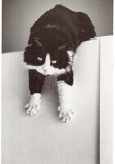 Postcrossing US-5495062 (booboo_babies) Tags: blackwhite cat postcrossing