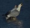 Ashbridges Bay Gulls (Arvo Poolar) Tags: water seagull reflections nature natural naturallight nikond7000 naturephotography outdoors ontario canada toronto arvopoolar reflectionwater