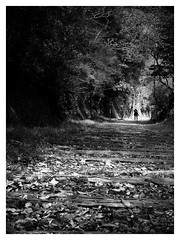 Best viewed large! Search of the waste line mark (明遊快) Tags: bw nature trees forest leaves walking man spring japan lines waste sunlight shadows sunny street blackandwhite walk