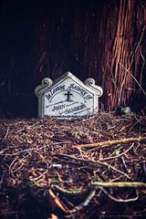 In loving memory (G. Postlethwaite esq.) Tags: belper dof derbyshire bark bokeh cemetery depthoffield grave headstone photoborder selectivefocus tree twigs
