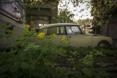 _DSC8295 (Foto-Runner) Tags: urbex lost decay voitures épaves abandonnés ds