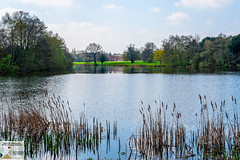 OstPrk_DSC8753 (Nick Woods Photography) Tags: water waterscape waterreflections waterscene landscape trees treereflections freshwater pond pondscene lake lakescene rushes bullrushes sunny sunshine nt nationaltrust nationaltrustosterleypark osterleypark osterley