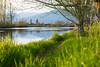 Middle Earth (briantolin) Tags: mapleridge britishcolumbia dyke river creek stream water landscape path nature allouetteriver