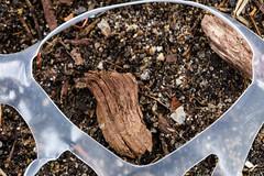 earth day trash (jlodder) Tags: chicago illinois unitedstates us sixpackring ground bark wood trash 12 macromondays plastic