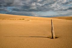 _DSC0119 Texture Sand (Charles Bonham) Tags: silverlakesanddunes silverdunes stump weathered wood tree texture sand clouds sun shadow sunlight sonya7rll sonyzeissfe1635mmf4 charlesbonhamphotography sidelight dune