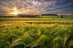 Warm sunset wheat (John Joslin) Tags: field wheat summer sunset agriculture england a7r clouds evening sun rural nature spring landscape rutland warm crop