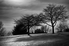 Cold (Modkuse) Tags: sensual400 monochrome landscape monochromefromslide fujichrome fujifilmsensia sensia400 nikon nikonslr bw blackandwhite nature natural trees shadows silhouette clouds cloudyday cloudy