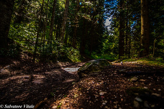 Foresta Biotopo Echen Folgaria - (TN)