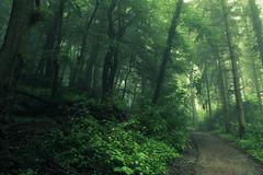 The Dome (Netsrak) Tags: baum bäume eu europa europe forst landschaft natur nebel wald fog forest landscape mist nature tree trees woods rheinbach nordrheinwestfalen deutschland de