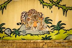 STREET ART LAUX (Sonja Ooms) Tags: art beirut laux lebanon mosko street streetartlaux
