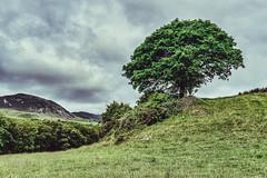 Irish Landscape II (**capture the essential**) Tags: 2018 clouds farbdominanz himmel ireland irland landscape landschaft sky sonya6300 sonye18200mmoss sonyilce6300 wetter wolken zeitgeist cloudy green grün wolkig