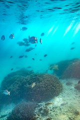 Heron Island Snorkel Underwater-49 (Quick Shot Photos) Tags: aquatechimagingsolutions canon canoncollective heronisland padi queensland scuba underwater snorkel bogie australia au