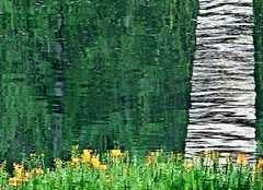 Devonian Reflection (ebergcanada) Tags: devoniangarden summer reflection canada abstract green lily water