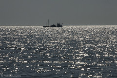 20180504.7566 (qoqbob1) Tags: maryland chesapeakebay spring sunny sailing outdoors water boats ships workingboats silhouette morning annapolis unitedstates usa