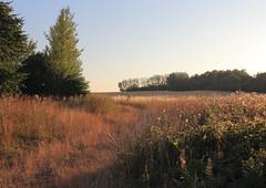 Evening walk on Fejø (harve64) Tags: fejø golden fields evening denmark walk