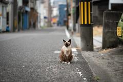 猫 (fumi*23) Tags: ilce7rm3 sony 85mm fe85mmf18 sel85f18 a7r3 emount katze gato neko cat chat animal street alley bokeh dof ねこ 猫 ソニー