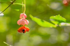 Shrub - blossom (a7m2) Tags: eichberg mödling loweraustria natur blume flora föhrenberge pflanze strauch wienerwald wandern spazieren joggen travel