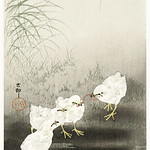 Chicks eating worms (1900 - 1930) by Ohara Koson (1877-1945). Original from the Rijks Museum. Digitally enhanced by rawpixel. thumbnail