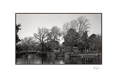 Boating Lake : Late July (radspix) Tags: 1951 kodak signet 35 44mm ektar f35 arista edu ultra 100 pmk pyro