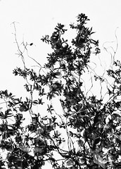 Serralves Reflections - 5 (annie.cure) Tags: atmosphere abstract details landscape monochrome blackandwhite water effect reflection texture mysterious mood nature noise blur canon 750d porto portugal serralves