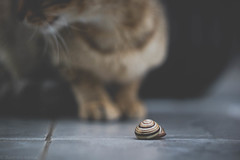 after the rain (rxndr) Tags: cat kitten pet fluffy meow garden animal closeup snail paws