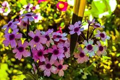 Getting up close... (Platoesq) Tags: flowers digitalphotography nikonphotography lightroom