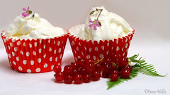 We melt together. (nyomee wallen) Tags: we wemelttogether cupcake icecreamcupcake robertsgeranium geraniumrobertianum herbrobert foxgeranium stinkingbob deathcomequickly storksbill squinterpipshropshire crowsfoot redvswhite globalwarming