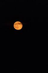 Lune rousse (aurelien.ebel) Tags: alsace basrhin france lawantzenau lune