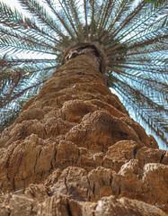 ف العلالي (Tarek Ezzat) Tags: نخلة حديقة الميريلاند مصر الجديدة القاهرة cairo garden palm