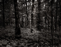 Light puddle under tree canopy (imageryRED) Tags: landscape voigtlander heliar speed graphic 4x5 large format