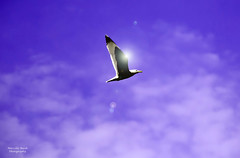 Natura (guitarmargy) Tags: landscape gabbiano byrd uccello sunset light violet colors paesaggio sky cielo wildlife animals clouds nuvole