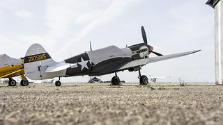 P40 Grounded