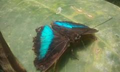 Mira'ns amb els teus ulls, mira'ns i prou. Encomana'ns la teva alegria. (minsaflama) Tags: papallona mariposa