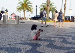 you can't start too soon (lualba) Tags: girl photographer palmtree palme mädchen fotografin cascais portugal digitalnative