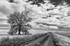 Lone Tree (burntpixel.ca) Tags: canada manitoba photo photograph rural fine art patrick mcneill burntpixel beautiful amazing landscape sony a7r2 a7rii sonya7r2 travel trip wander adventure journey monochrome black white bw prairie tree road distance clouds