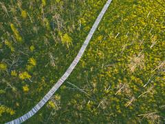 Dubrava Swamp (A. Aleksandravičius) Tags: swamp walk lithuanian wetland nature reserve dubrava swam lietuva kaunascounty kaunorajonas