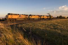 Morning glow (Tom Trent) Tags: junctioncity oregon unitedstates us lanecounty unionpacific c408 c44accte sd70m ge emd diesel up meadowview