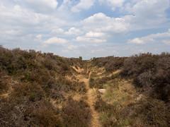 Balloërveld (Jeroen Hillenga) Tags: balloërveld drenthe heide netherlands nederland natuur nature natuurgebied natur tankgracht