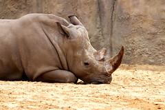 IMG_0799 (Bob_lewerissa) Tags: wildlands emmen zoo canon 80d 70200 l nonis usm