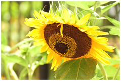 THE YELLOW WORLD! (SHAN DUTTA) Tags: fantasticflower