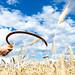 sicle in a rye field