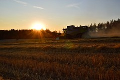 DSC_8636 (anetaležáková) Tags: summer sunset summerharvest sunnydays harvest agriculture agriphoto czechagri caseihpuma case casepuma165 caseoptum casepuma200 claas claaslexion newholland