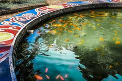 Extended (Melissa Maples) Tags: batumi batum ბათუმი adjara აჭარა georgia gürcistan sakartvelo საქართველო asia 土耳其 apple iphone iphonex cameraphone spring მწვანეკეპი mtsvanecape ბოტანიკურიბაღი botanicalgarden circle round fish fountain water