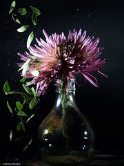 Rain (andreea_mihailiuc) Tags: flickr flower abstractmacro shutterspeed speed speedlight lowkey lowlight indoor canoneos750d 55250mm andreeamihailiuc photographer studiolight