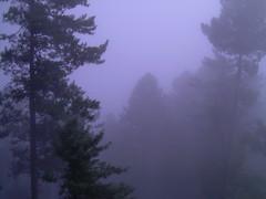 Not smoke - but clouds (shakirhussain) Tags: nathiagali