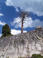 20060813 Dead Tree