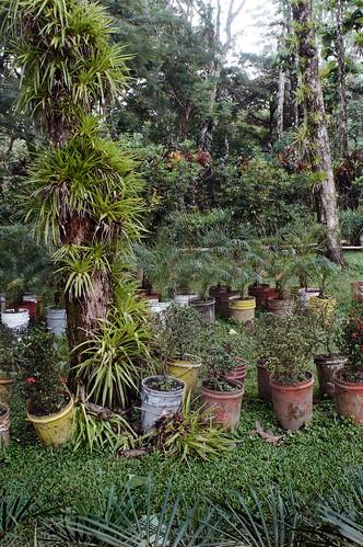 El Nispero Epiphytes in Nusery